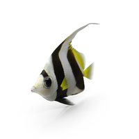 Bannerfish PNG & PSD Images