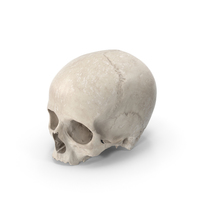 Human Skull White PNG & PSD Images
