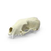Beech Marten Skull PNG & PSD Images