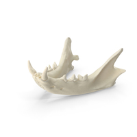 Domestic Cat Jaw Bone PNG & PSD Images