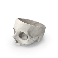 Human Skull Cut White PNG & PSD Images