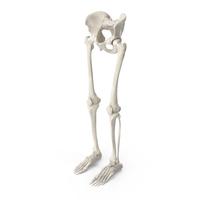 Human Legs and Pelvis Bones PNG & PSD Images