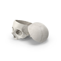 Human Skull Cut With Piece White PNG & PSD Images