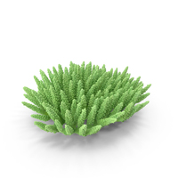 Coral PNG & PSD Images