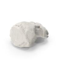 Distal Phalanx Bone of Little Toe White PNG & PSD Images