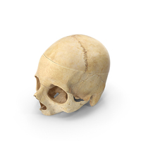 Human Skull with Cut Piece PNG & PSD Images