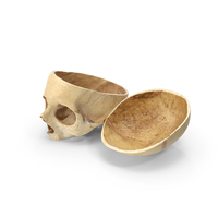 Human Skull Cut With Piece PNG & PSD Images