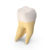 Second Molar Upper Jaw Right Clean PNG & PSD Images
