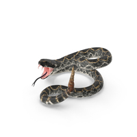 Rattlesnake Attacking PNG & PSD Images