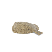 Turbot PNG & PSD Images