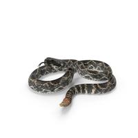 Rattlesnake PNG & PSD Images