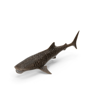 Whale Shark PNG & PSD Images