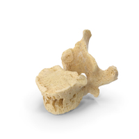 Thoracic Vertebrae PNG & PSD Images
