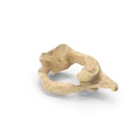 Cervical Vertebrae PNG & PSD Images