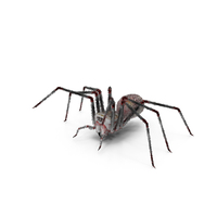 Spider PNG & PSD Images