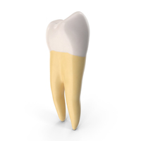 Molar Lower Jaw Left Clean PNG & PSD Images