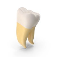 Molar Upper Jaw Right Clean PNG & PSD Images