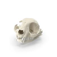 Domestic Cat Skull PNG & PSD Images