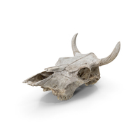 Cow Skull PNG & PSD Images