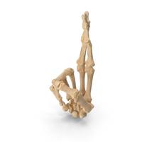 Skeletal Fingers Crossed PNG & PSD Images
