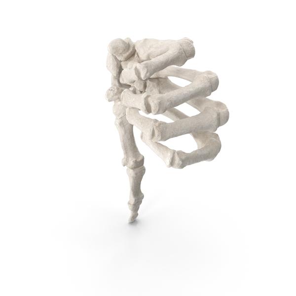 Human Hand Bones White Dislike Sign PNG & PSD Images