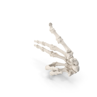 Human Hand Bones White Gun Sign PNG & PSD Images