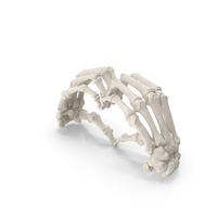 Human Hand Bones White Heart Sign PNG & PSD Images