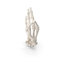 Human Hand Bones White Ok Sign PNG & PSD Images