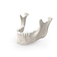 Human Woman Jawbone PNG & PSD Images