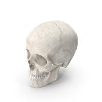 Human Woman Skull PNG & PSD Images