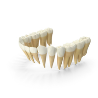 Realistic Lower Jaw Teeths PNG & PSD Images