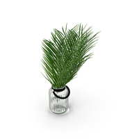 Palm Leaves PNG & PSD Images