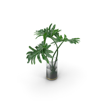 Philodendron Leaves PNG & PSD Images
