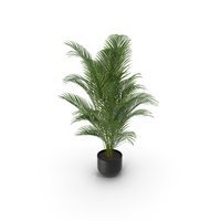 Areca Palm PNG & PSD Images