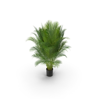 Photorealistic Palm PNG & PSD Images