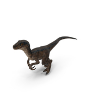 Velociraptor Walking PNG & PSD Images