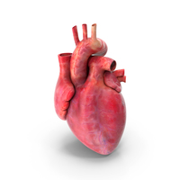 Heart Anatomy PNG & PSD Images