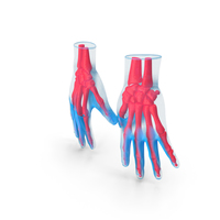 Hand Anatomy Blue PNG & PSD Images