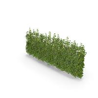 Ivy Patch 5x2,5m PNG & PSD Images