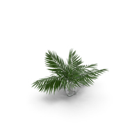 Tropical Leaves PNG & PSD Images