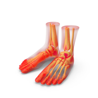 Foot Anatomy Red PNG & PSD Images
