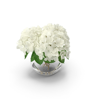 White Hydrangea Macrophylla in Glass Bowl PNG & PSD Images