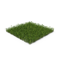 Grass With Clovers PNG & PSD Images