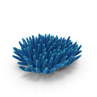 Coral Blue PNG & PSD Images