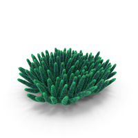 Coral Green PNG & PSD Images