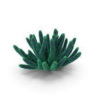 Coral Dark Green PNG & PSD Images