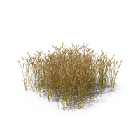 Common Wheat Field PNG & PSD Images