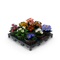 Common Primroses in Pots and Crate PNG & PSD Images