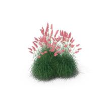 Pampas Grass Set PNG & PSD Images