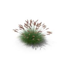 Dwarf Fountain Grass PNG & PSD Images